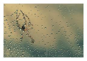 .:Wet work:. by Katosu
