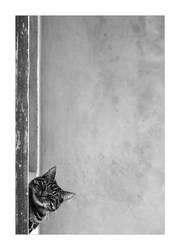 .:Snooper:. by Katosu