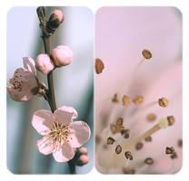 .: Peach bloosom :. II by Katosu