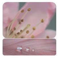 .: Peach bloosom :. III by Katosu