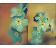 ..: Forget-me-not :.. by Katosu