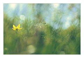 .: Blur :. by Katosu