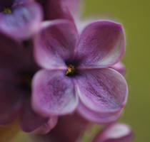 .: Lilac :. III by Katosu