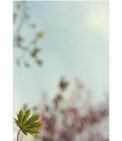 .: Maple tree :. V by Katosu