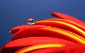 .: Colourful :. VIII by Katosu
