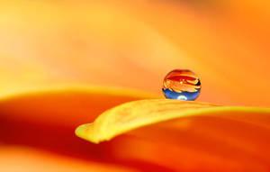 .: Orange optimism :. by Katosu