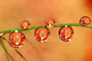 .: Summer droplets :. by Katosu