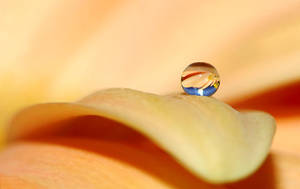 .: Summer droplet :. by Katosu