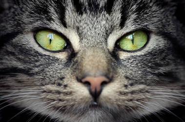 .: Kocik - the cat :. by Katosu