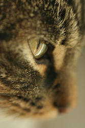 .: Focused cat :. by Katosu