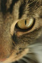 .: A half of a cat :. by Katosu
