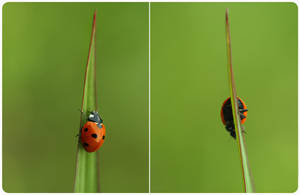 .: Ladybird :. by Katosu