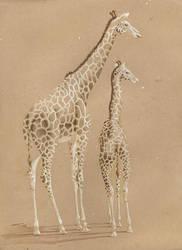 Giraffes by sinccolor