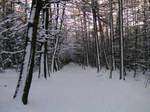 Winterwald by Dreikun