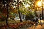 Autumn - sunlight by valixa