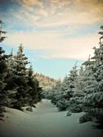 winterpath by wilda23