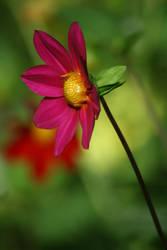cute pink flower by Danye1a