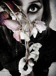 withered flowers by mychofy