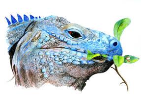 Lizard by Alene
