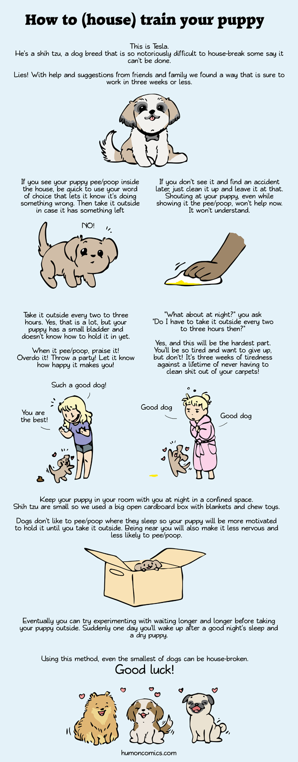 How to house break your pup by humon