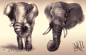 Elephants by JakkeV