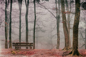 Radical Silence by tvurk
