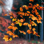 Autumn Leaves by tvurk