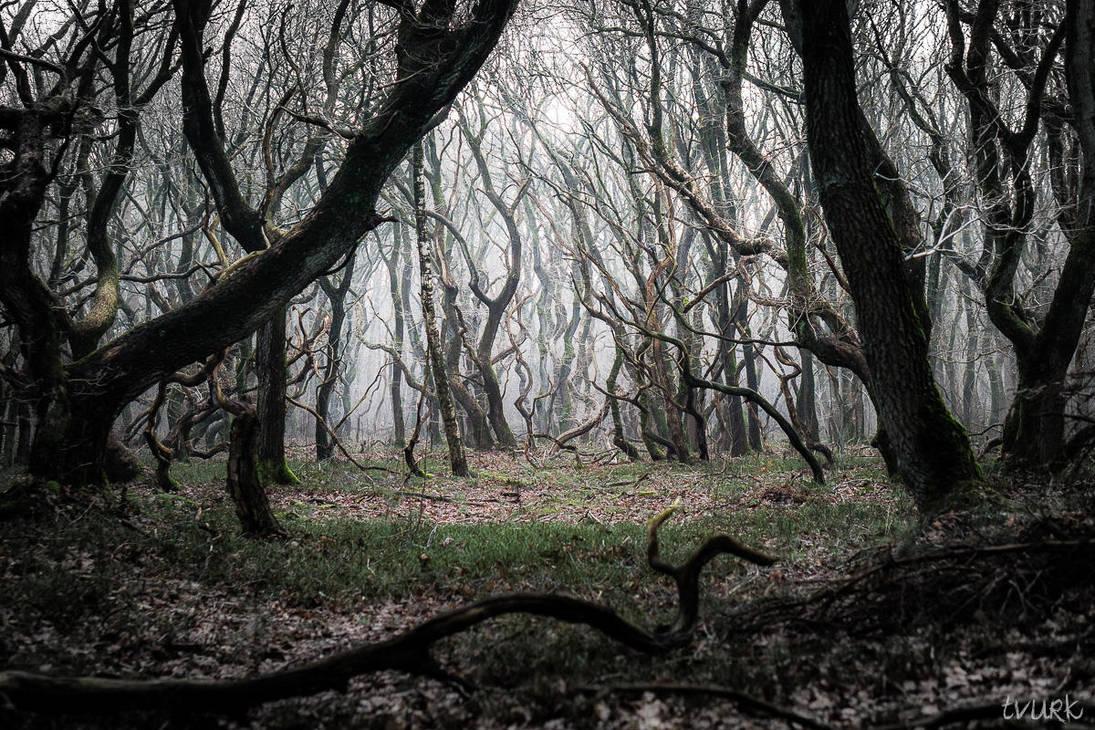 Enter Mirkwood by tvurk