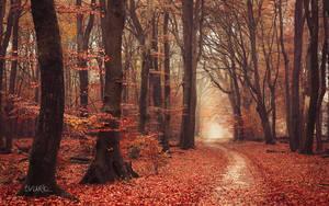 Autumnal Joy by tvurk