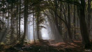 Forest Vista by tvurk