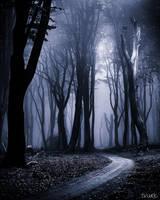 Indigo Woods by tvurk