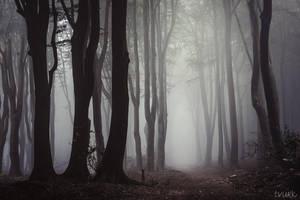 Haunting Fog by tvurk