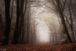 Misty Meeting by tvurk