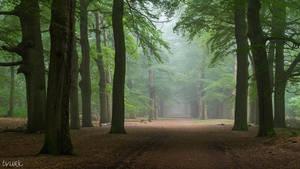 Peaceful Greenery by tvurk