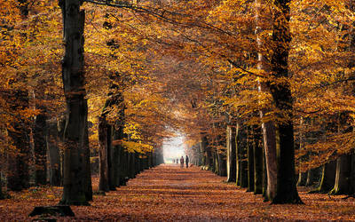 Just Before The Leaves Fell by tvurk