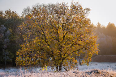 The Tree of Light by tvurk