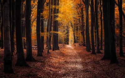 Tangerine Dream by tvurk