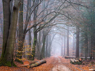 The Timber Woods by tvurk
