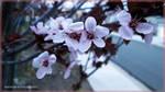 Spring Flowers by sintar