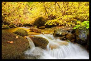 Autumn Splendor by hikester
