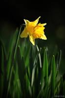 Spring sun by George---Kirk