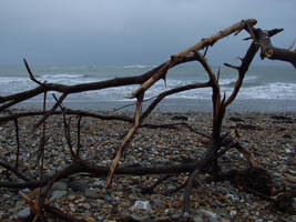 driftwood by i-am-abomination