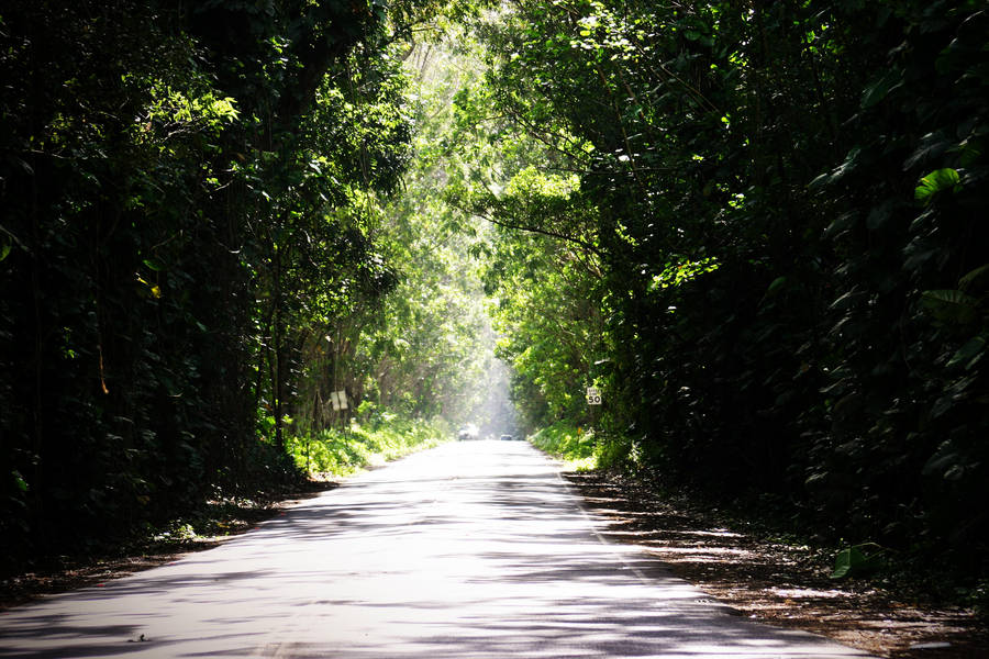 Tunnel of Trees in Kauai by pacomontoya