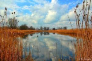 dreamland linum 2 by MT-Photografien