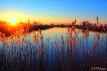 dreamland linum 8 by MT-Photografien