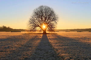 Sunrise on a beautiful frosty winter day 4 by MT-Photografien