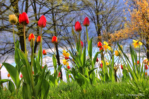 spring paradise 1 by MT-Photografien