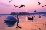 nice spring evening at Tegeler lake by MT-Photografien
