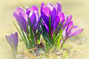 spring awakening by MT-Photografien
