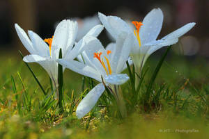 spring awakening with drops of water by MT-Photografien